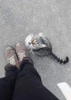 1. pisica